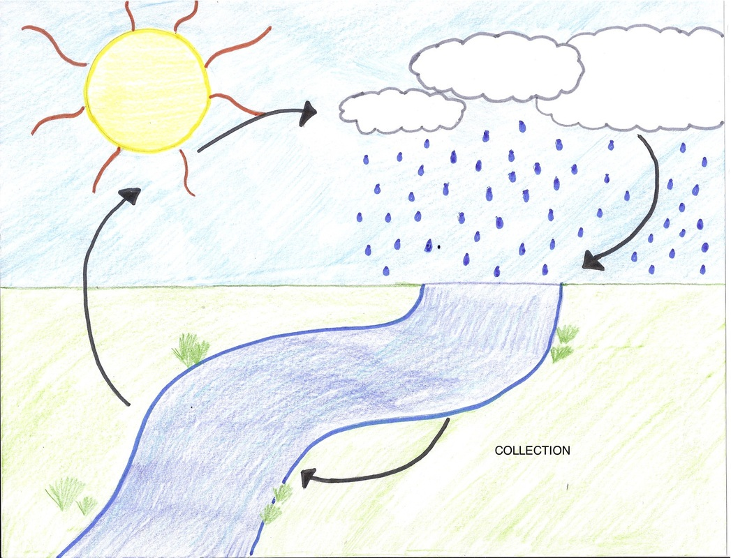 Collection - Water Cycle